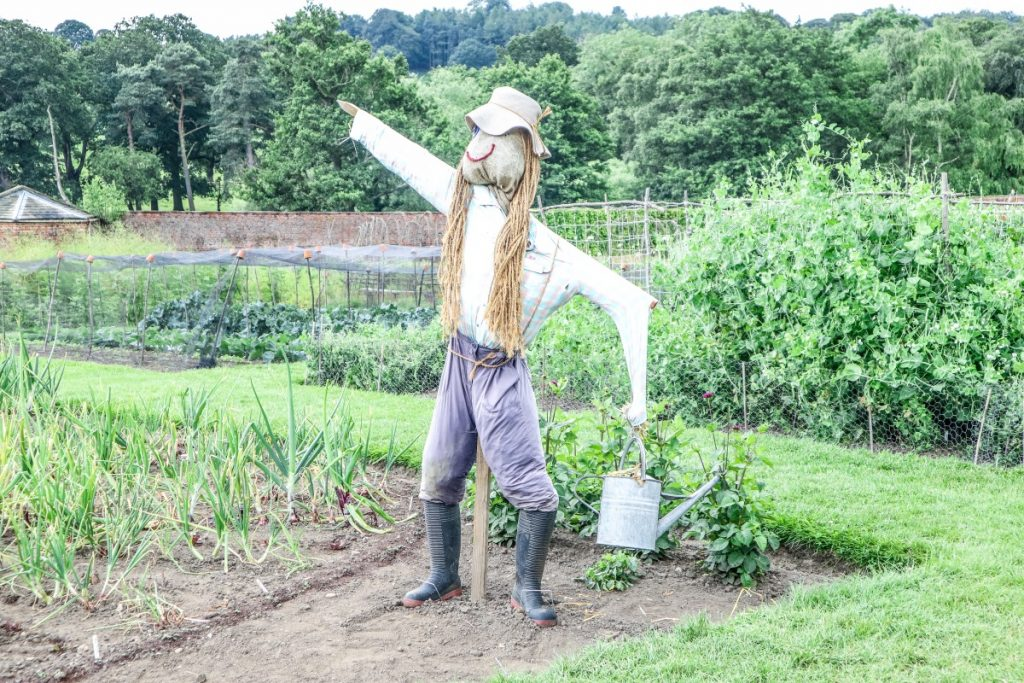 Met a scarecrow when visitiing Harewood House in Yorkshire
