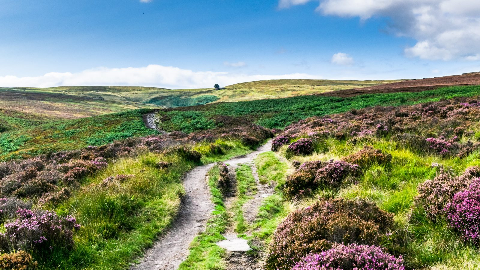 Yorkshire Moors Near Top Withens, Rumoured to be the setting for Wuthering Heights by Charlotte Bronte of the Bronte Sisters