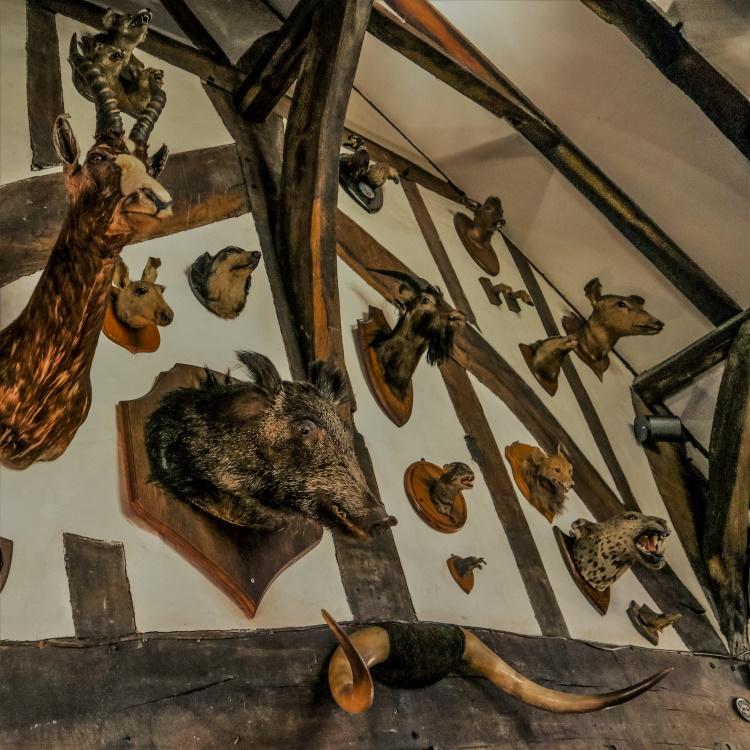 The grisly decor in the House of the Trembling Madness is not vegetarian friendly but seeing it is one of the best things to do in York at night