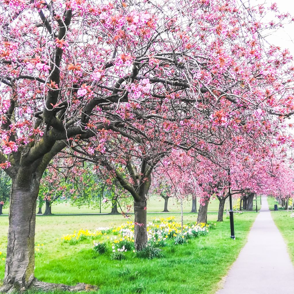 The Glorious Stray in Harrogate, Yorkshire is one of the best places to visit on a trip to Harrogate