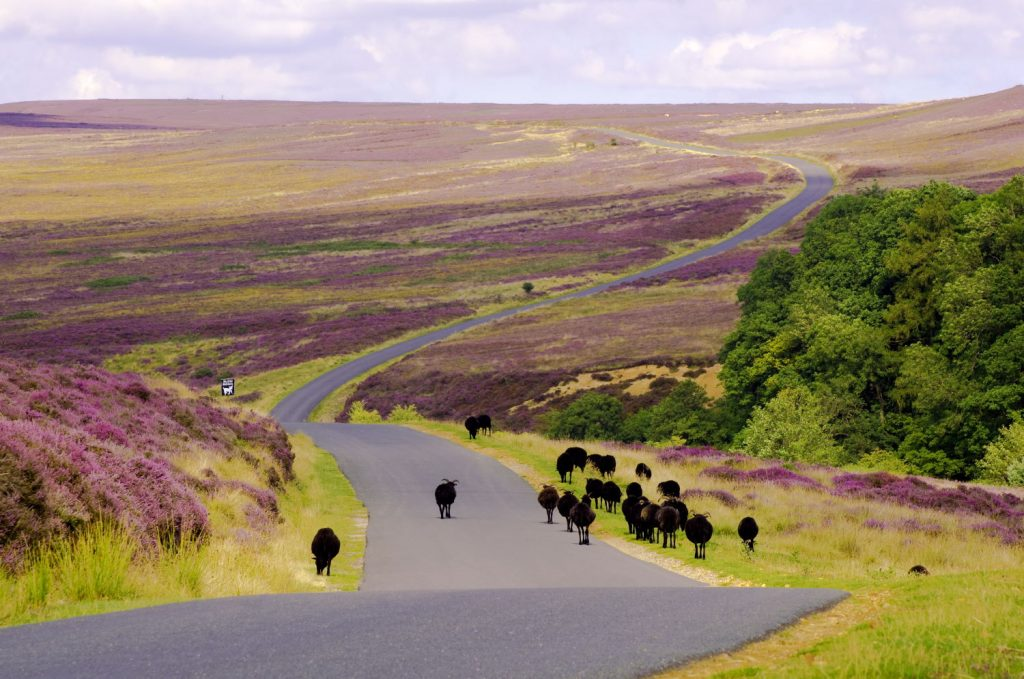 Spaunton Moor, Hutton le Hole, Yorkshire is one of the most beautiful towns in Yorkshire