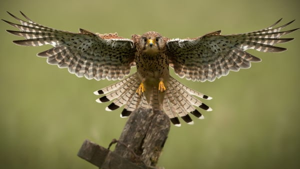 Yorkshire Bird Watching min