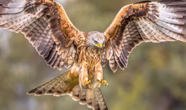 Yorkshire Birdlife min